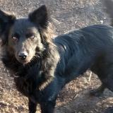 kutya-menhely-gazdit-keres-hajdú-bihar-hajdúszoboszló-kutya-orokbefogadas-2020.januar-1