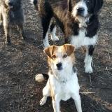 kutya-menhely-gazdit-keres-hajdú-bihar-hajdúszoboszló-kutya-orokbefogadas-2020.januar-12