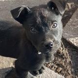 kutya-menhely-gazdit-keres-hajdú-bihar-hajdúszoboszló-kutya-orokbefogadas-2020.januar-17