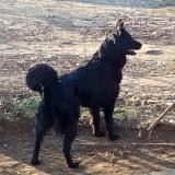 kutya-menhely-gazdit-keres-hajdú-bihar-hajdúszoboszló-kutya-orokbefogadas-2020.januar-19