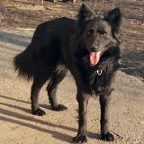 kutya-menhely-gazdit-keres-hajdú-bihar-hajdúszoboszló-kutya-orokbefogadas-2020.januar-21