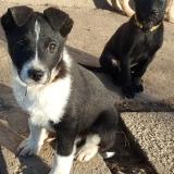 kutya-menhely-gazdit-keres-hajdú-bihar-hajdúszoboszló-kutya-orokbefogadas-2020.januar-22