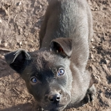 kutya-menhely-gazdit-keres-hajdú-bihar-hajdúszoboszló-kutya-orokbefogadas-2020.januar-23
