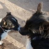 kutya-menhely-gazdit-keres-hajdú-bihar-hajdúszoboszló-kutya-orokbefogadas-2020.januar-25