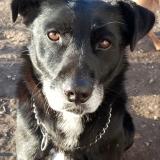 kutya-menhely-gazdit-keres-hajdú-bihar-hajdúszoboszló-kutya-orokbefogadas-2020.januar-26