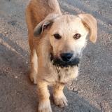 kutya-menhely-gazdit-keres-hajdú-bihar-hajdúszoboszló-kutya-orokbefogadas-2020.januar-32