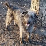 kutya-menhely-gazdit-keres-hajdú-bihar-hajdúszoboszló-kutya-orokbefogadas-2020.januar-5