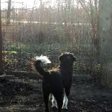 kutya-menhely-gazdit-keres-hajdú-bihar-hajdúszoboszló-kutya-orokbefogadas-2020.januar-8