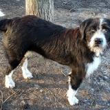 kutya-menhely-gazdit-keres-hajdú-bihar-hajdúszoboszló-kutya-orokbefogadas-2020.januar-9