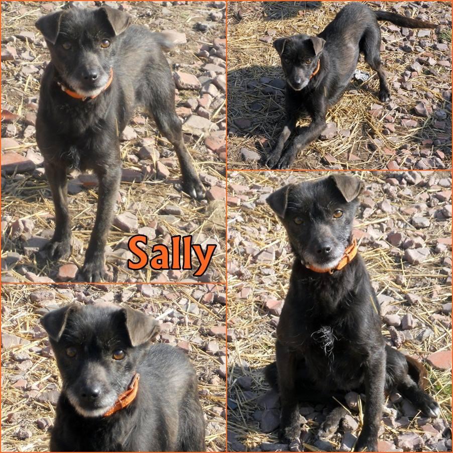 menhely-kutya-orokbefogadas-hajduszoszlo-12