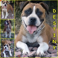 orokbefogadhato-kutya-hajduszoboszlo-destiny-1