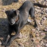 menhely-kutya-orokbefogadas-hajduszoszlo-sally-1
