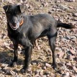 menhely-kutya-orokbefogadas-hajduszoszlo-sally-4