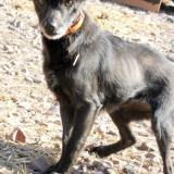 menhely-kutya-orokbefogadas-hajduszoszlo-sally-6