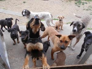 orokbefogadhato-kutyak-hajduszoboszlo10