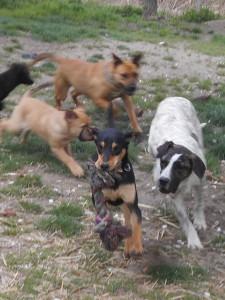 orokbefogadhato-kutyak-hajduszoboszlo15