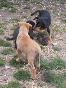 orokbefogadhato-kutyak-hajduszoboszlo16