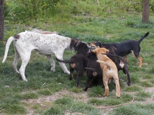 orokbefogadhato-kutyak-hajduszoboszlo17