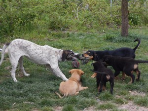 orokbefogadhato-kutyak-hajduszoboszlo18