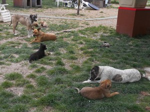 orokbefogadhato-kutyak-hajduszoboszlo2