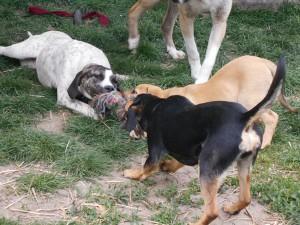 orokbefogadhato-kutyak-hajduszoboszlo20