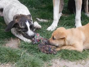 orokbefogadhato-kutyak-hajduszoboszlo21
