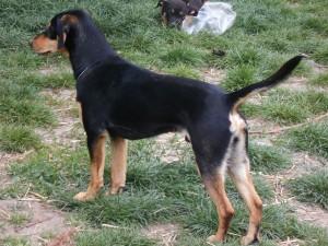 orokbefogadhato-kutyak-hajduszoboszlo22