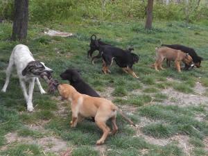 orokbefogadhato-kutyak-hajduszoboszlo24