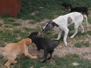 orokbefogadhato-kutyak-hajduszoboszlo25
