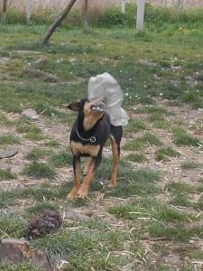 orokbefogadhato-kutyak-hajduszoboszlo27