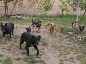 orokbefogadhato-kutyak-hajduszoboszlo3