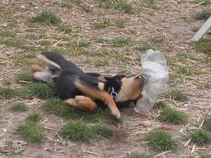 orokbefogadhato-kutyak-hajduszoboszlo30