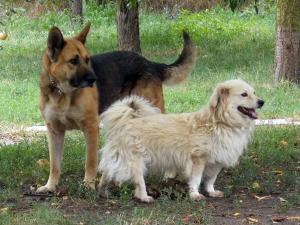 kutya-orokbefogadas-hajduszoszlo-1