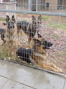 kutya-orokbefogadas-hajduszoszlo-109