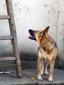 kutya-orokbefogadas-hajduszoszlo-12