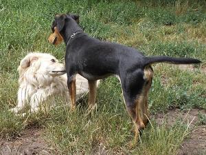 kutya-orokbefogadas-hajduszoboszlo-2017-julius-10