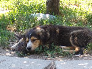 kutya-orokbefogadas-hajduszoboszlo-2017-julius-100