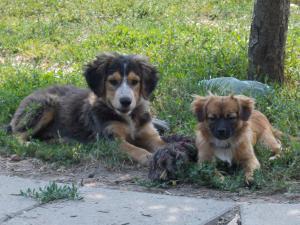 kutya-orokbefogadas-hajduszoboszlo-2017-julius-102