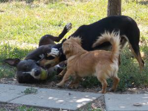 kutya-orokbefogadas-hajduszoboszlo-2017-julius-104