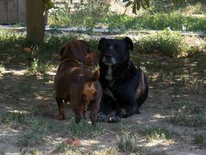 kutya-orokbefogadas-hajduszoboszlo-2017-julius-110
