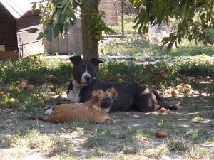 kutya-orokbefogadas-hajduszoboszlo-2017-julius-116