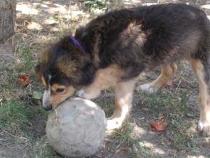 kutya-orokbefogadas-hajduszoboszlo-2017-julius-121