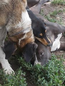 kutya-orokbefogadas-hajduszoboszlo-2017-13