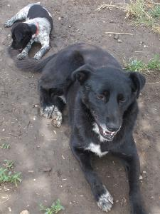 kutya-orokbefogadas-hajduszoboszlo-2017-18