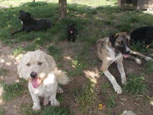 kutya-orokbefogadas-hajduszoboszlo-10
