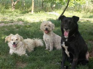 kutya-orokbefogadas-hajduszoboszlo-13