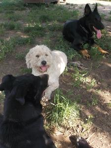kutya-orokbefogadas-hajduszoboszlo-18