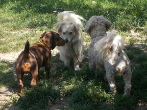 kutya-orokbefogadas-hajduszoboszlo-19
