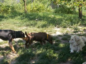 kutya-orokbefogadas-hajduszoboszlo-20