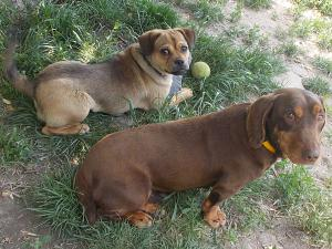kutya-orokbefogadas-hajduszoboszlo-24